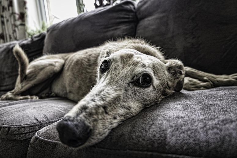 dog-2579885_1920