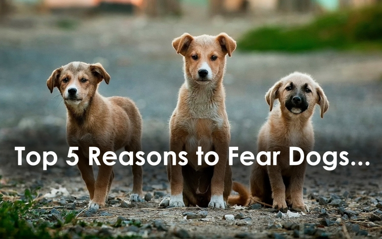Top 5 Reasons to Fear Dogs